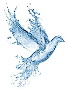 Wasserfilter - waterbird